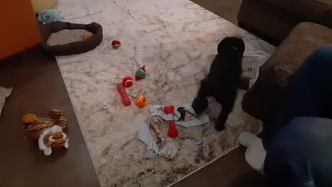 Who needs puppy toys