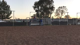 Bull Riding Gender Reveal