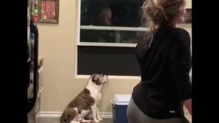 Melancholic Dog Not Interested In House Party   - Video