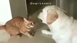 Cat with A Dog in The Face