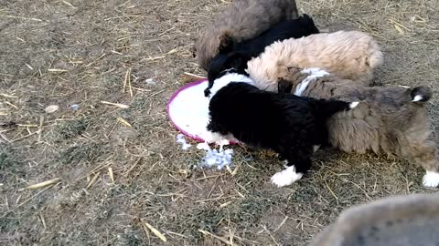 Puppy's First Meal