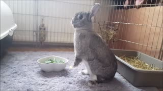 Cute Bunny Snack Time! - Video