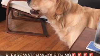 Dog reacts to sound of firetruck