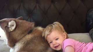 Baby gives husky hug and kiss before nap time