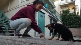 Puppy already knows wide variety of tricks - Video