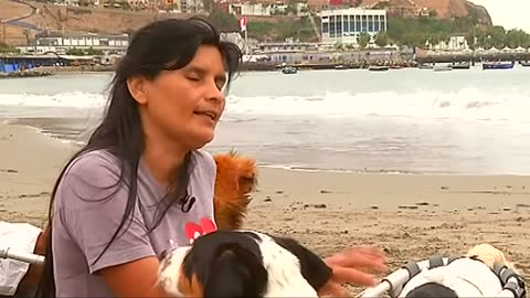 Every dog has their day at this shelter in Peru