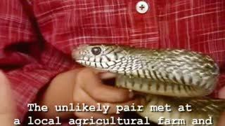 Kid Friends With Poisonous Snake - Video
