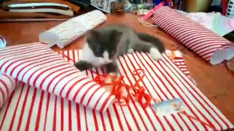 "Kitten adorably ""helps"" owner wrap Christmas gifts"