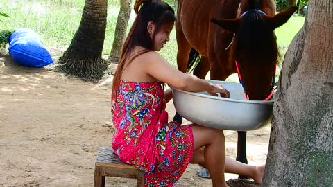 Wow ! Funny Girl Play Horse! Cute Girl Give Special Food To A Horse In the farm