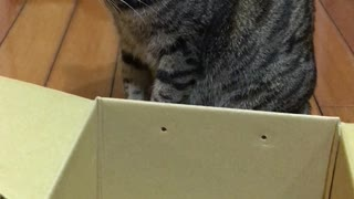 Cat Tries to Wiggle Herself into a Box