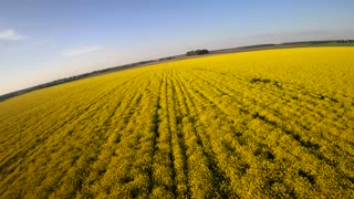 Racing drone on bright yellow field 4K