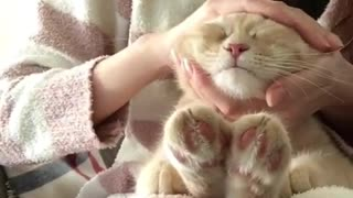 cat sleep - Video