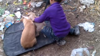 Children playing with dogs