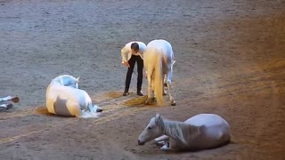 Jean Francois Pignon performs with a herd of horses - Video
