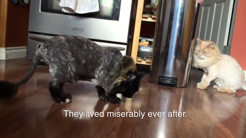 This Cats Gets A Haircut, And The Reaction From Her Sister Is Priceless!