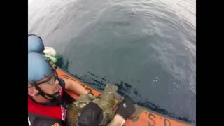 US Coast Guard rescues turtles while looking for drugs - Video