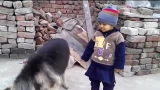 small boy playing with dog  - Video