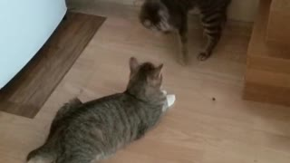 Two cats play with a currant berry
