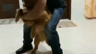Golden Retriever Sees Owner After 9 Months, Delivers Emotional Response