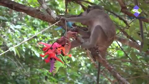 What are the monkeys doing with animal toys on the trees?