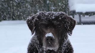 doggie and snowflakes