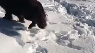 "Girl thinks dog is making ""snow puppy angels""  - Video"
