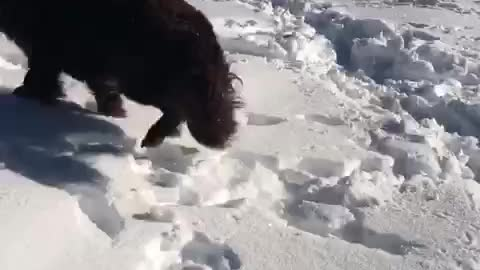"Girl thinks dog is making ""snow puppy angels"""