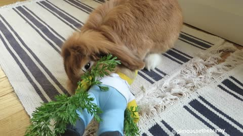 Pimousse bullied Homer who brought him some carrot tops