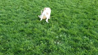 Playful Puppies at the dog park are the cutest thing ever!