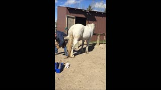Difficult Horse Duct Tape Trick - Video