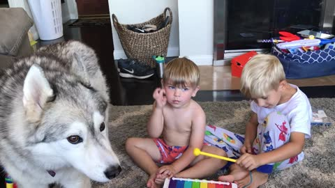 Singing husky howls along with the kids