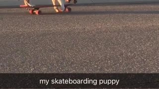 Brown puppy riding skateboard on it own on road