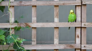 Beautiful parrot and wooden fence