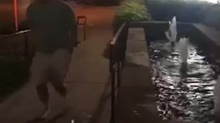 Guy takes off shorts and belly flops into fountain at night