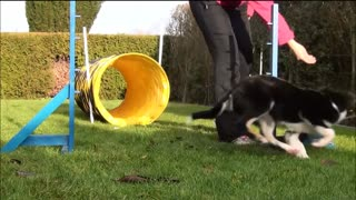 Agility training for puppies