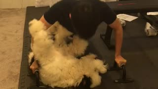 Dog works out with fluffy dog - Video