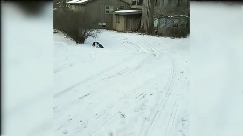 Brave Dog Goes For A Snow Ride