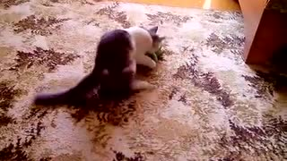 The kitten plays and attacks a toy