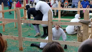 Sheep Mating Performance at Children's Theatre - Video