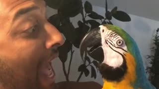 Macaw and Man Have a Screaming Competition