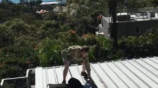 Carpet Python Caught on Roof