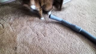 Cat vs Vacuum Cleaner