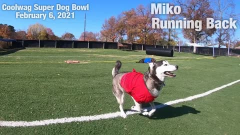 Coolwag Super Dog Bowl Starting Line Up featuring Luna, Miko and Milo