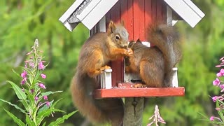 Squirrel Forest Animals Bird - Video
