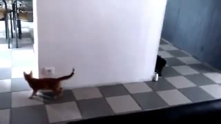 Cute Kitten Sneak Attack Another Cat