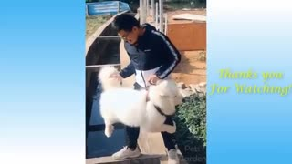 Cute Pets And Funny Animals Compilation#1Pets Garden