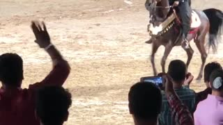 horses competition!
