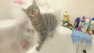 Cute Cat Video Cat Lick Shower Curtain  - Video