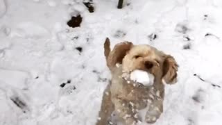 Dog catches snowball with mouth  - Video