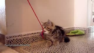 These Ferocious Little Tigers Are Here To Show Us What Kittens Are Really Made Of - Video